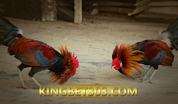 S128 Sabung Ayam Live