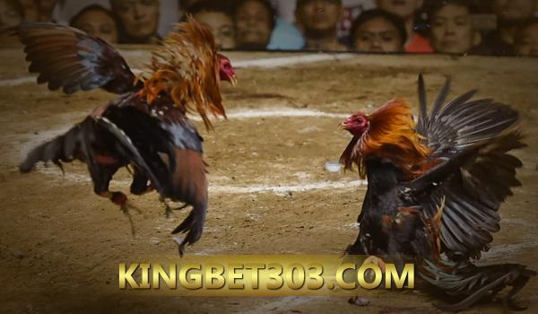 Sabung Ayam Live S128