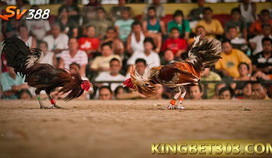 Bermain Sabung Ayam S128