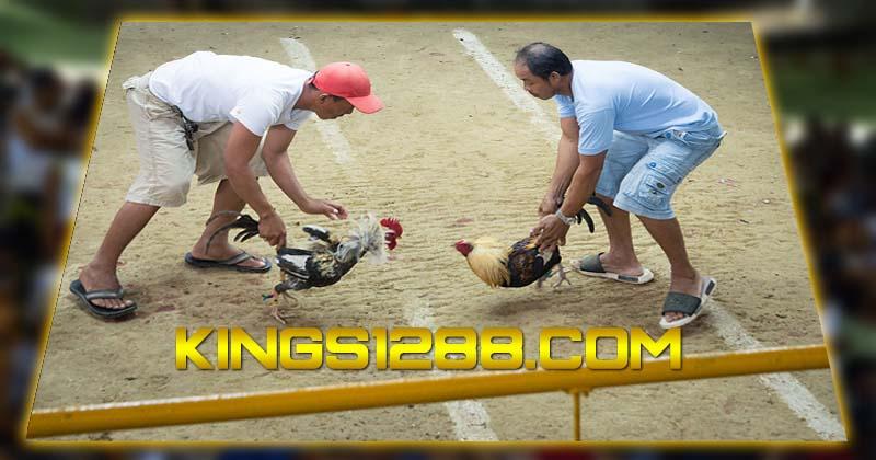 Adu Ayam Live S128