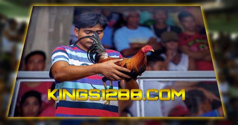 Adu Ayam Online Live