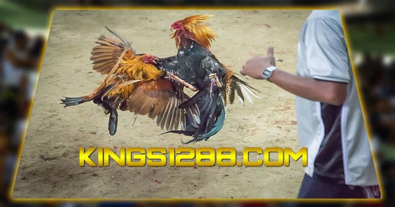 Sabung Ayam Online Filipina