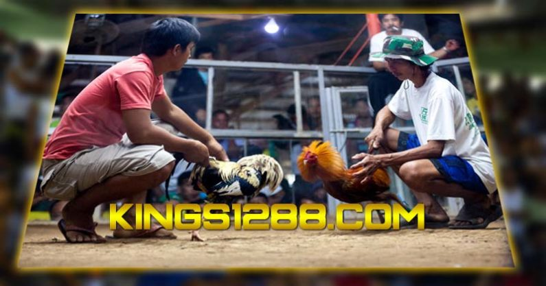 Situs Adu Ayam Online
